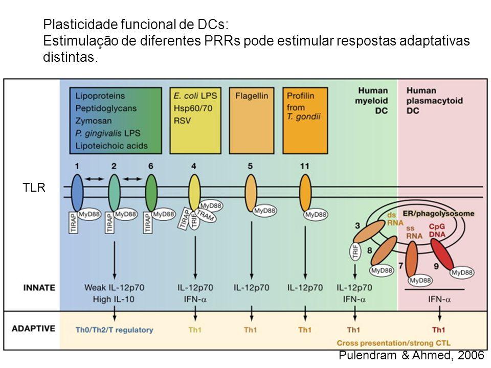 Plasticidade funcional de DCs: Estimulação de diferentes PRRs pode estimular respostas adaptativas distintas. TLR Pulendram & Ahmed, 2006