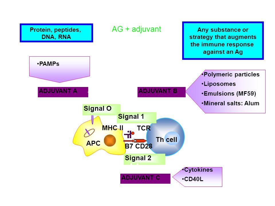 ADJUVANT A TCR CD28B7 MHC II APC Th cell Signal O Signal 1 Signal 2 ADJUVANT B ADJUVANT C PAMPs Polymeric particles Liposomes Emulsions (MF59) Mineral