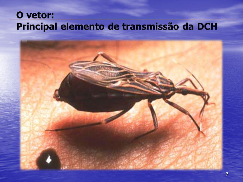 7 O vetor: Principal elemento de transmissão da DCH
