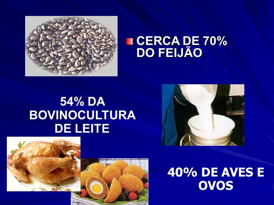 CERCA DE 60% DOS ALIMENTOS CONSUMIDOS PELOS BRASILEIROS VÊM DA AGRICULTURA FAMILIAR