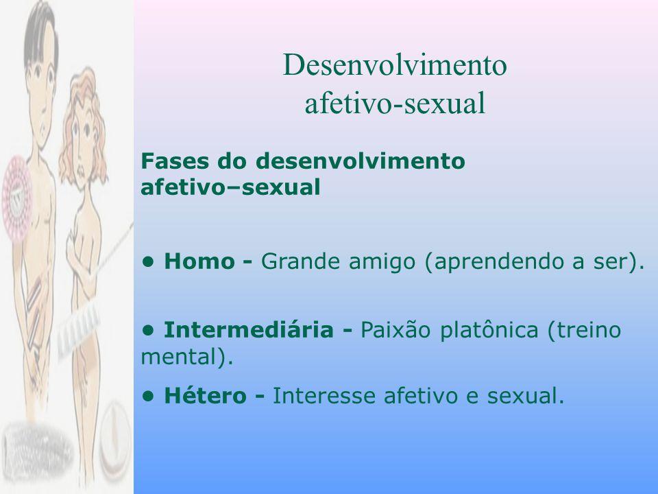 Desenvolvimento afetivo-sexual Fases do desenvolvimento afetivo–sexual Homo - Grande amigo (aprendendo a ser).