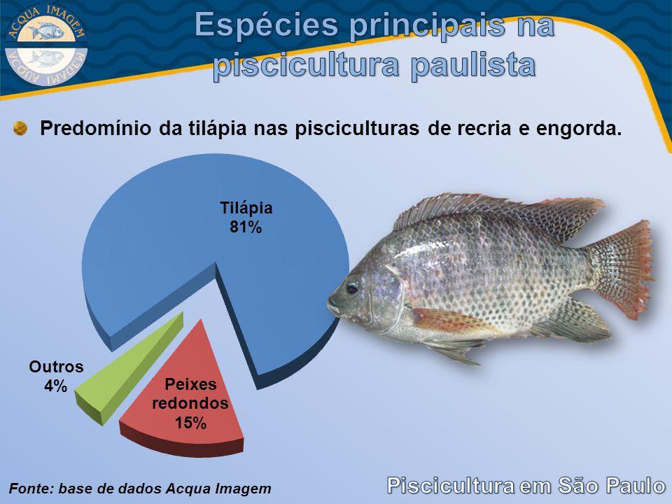Predomínio da tilápia nas pisciculturas de recria e engorda. Fonte: base de dados Acqua Imagem