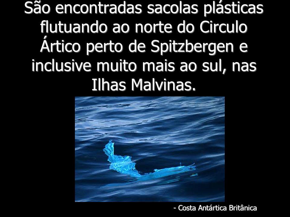 São encontradas sacolas plásticas flutuando ao norte do Circulo Ártico perto de Spitzbergen e inclusive muito mais ao sul, nas Ilhas Malvinas. - Costa