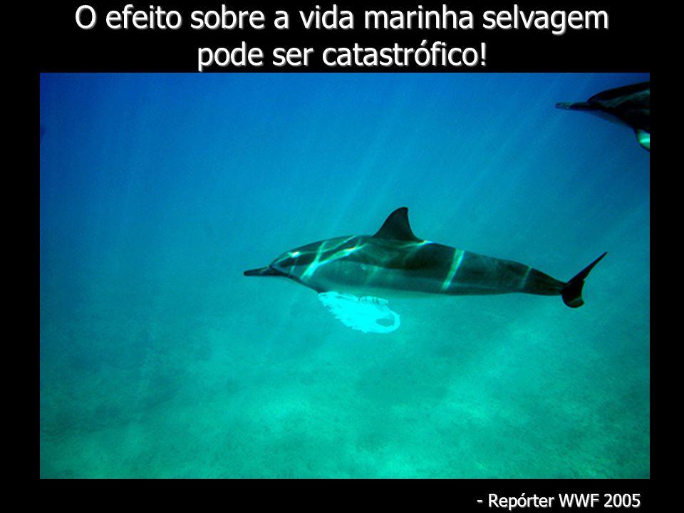 O efeito sobre a vida marinha selvagem pode ser catastrófico! - Repórter WWF 2005