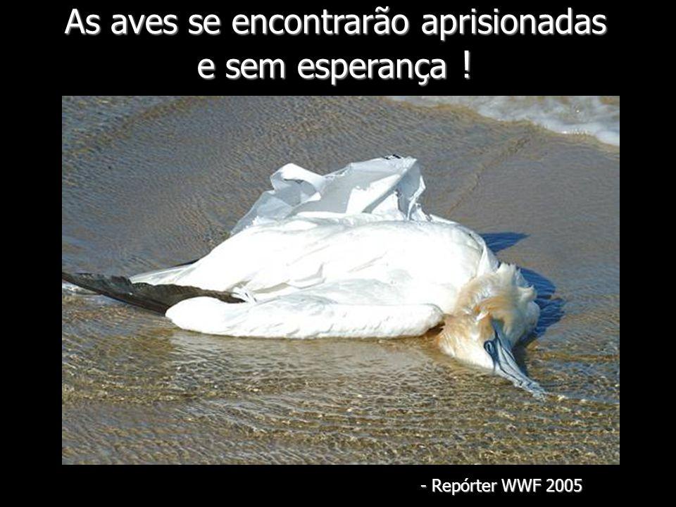 As aves se encontrarão aprisionadas e sem esperança ! - Repórter WWF 2005