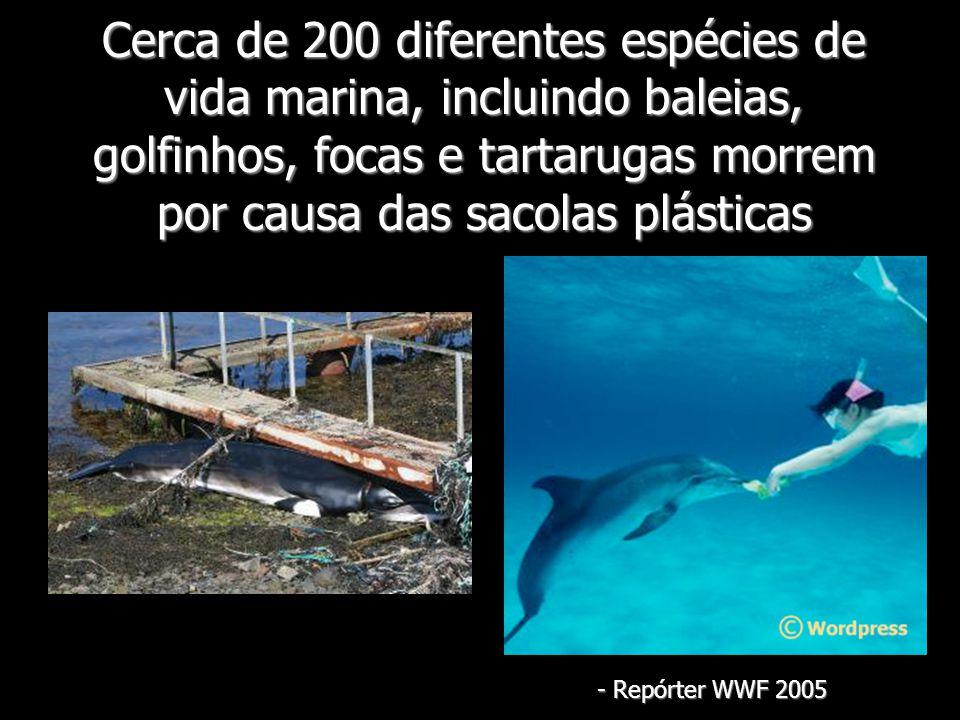 Cerca de 200 diferentes espécies de vida marina, incluindo baleias, golfinhos, focas e tartarugas morrem por causa das sacolas plásticas - Repórter WW