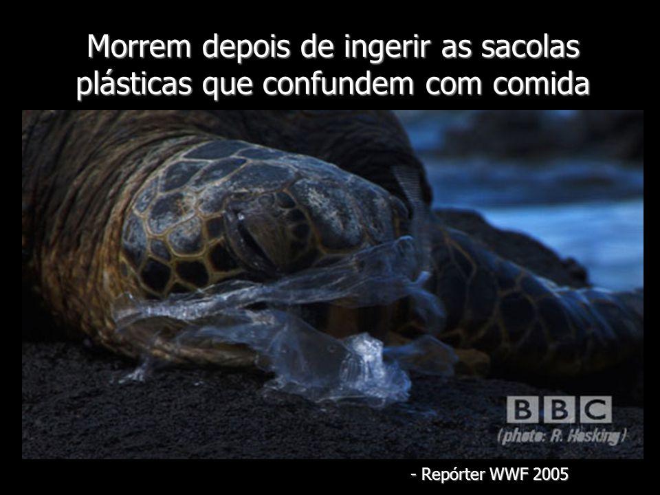 Morrem depois de ingerir as sacolas plásticas que confundem com comida - Repórter WWF 2005