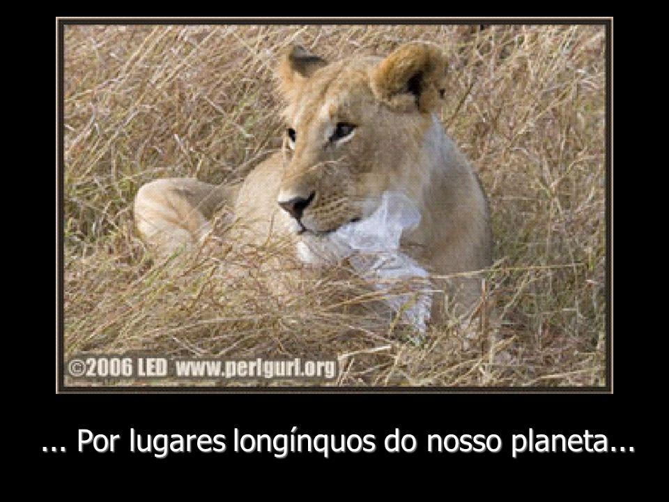 ... Por lugares longínquos do nosso planeta...