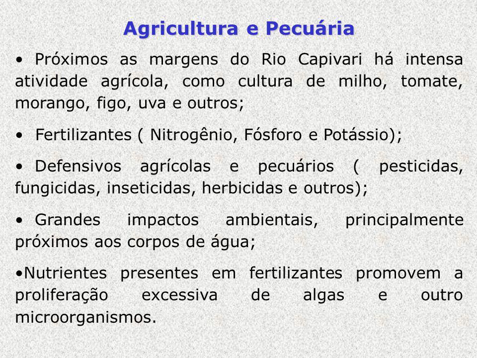 Agricultura e Pecuária Próximos as margens do Rio Capivari há intensa atividade agrícola, como cultura de milho, tomate, morango, figo, uva e outros;