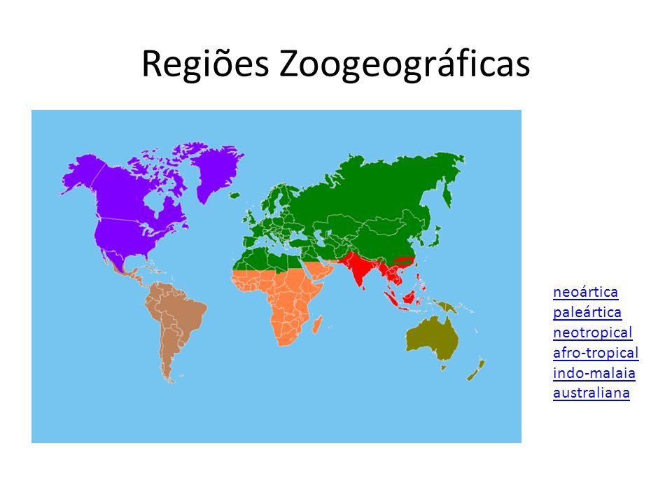 Regiões Zoogeográficas neoártica paleártica neotropical afro-tropical indo-malaia australiana