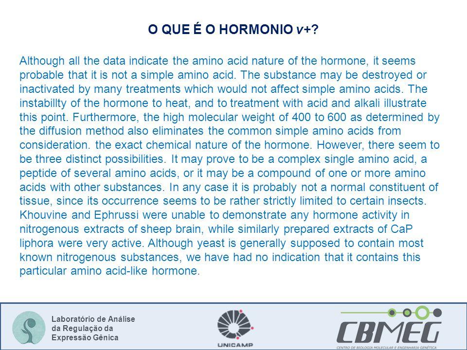 Laboratório de Análise da Regulação da Expressão Gênica O QUE É O HORMONIO v+? Although all the data indicate the amino acid nature of the hormone, it