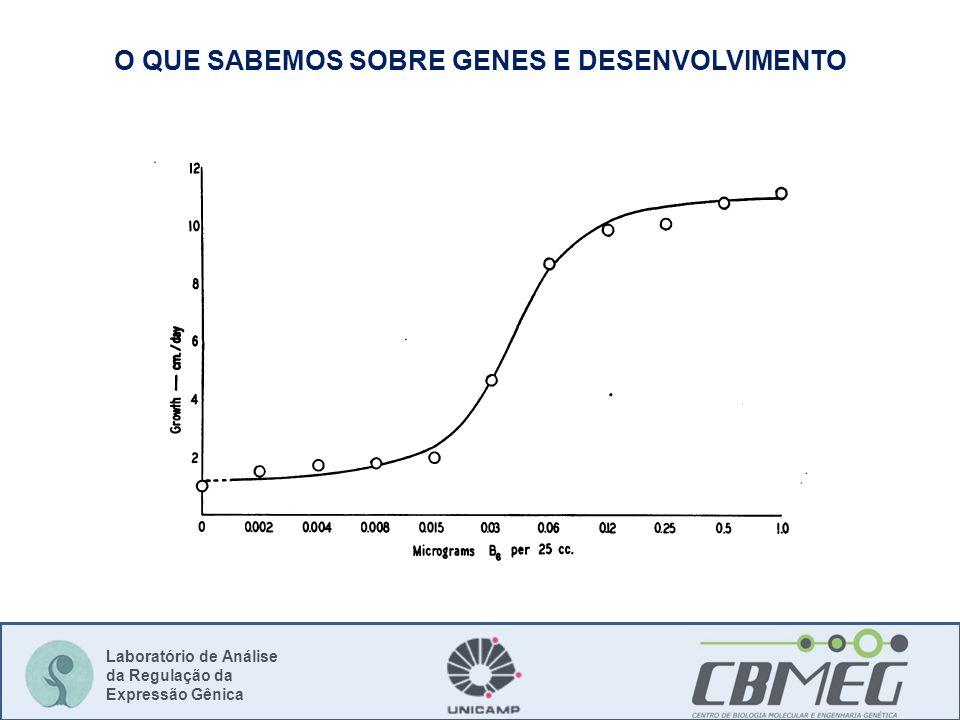 Laboratório de Análise da Regulação da Expressão Gênica O QUE SABEMOS SOBRE GENES E DESENVOLVIMENTO