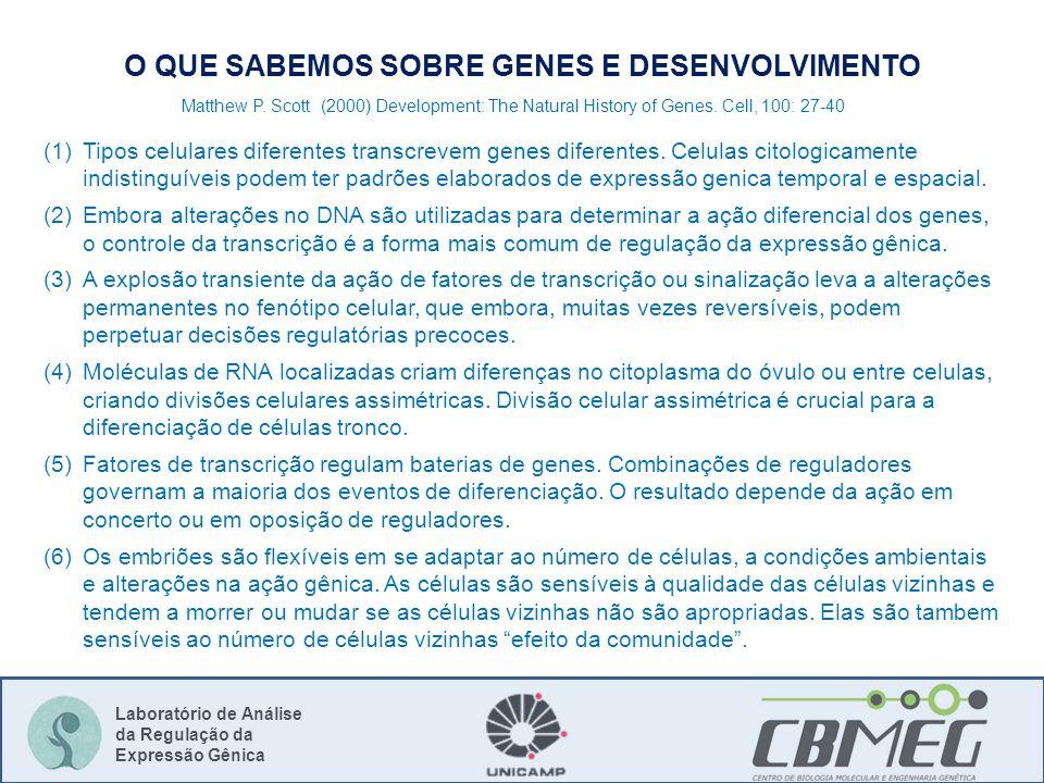 Laboratório de Análise da Regulação da Expressão Gênica O QUE SABEMOS SOBRE GENES E DESENVOLVIMENTO (1)Tipos celulares diferentes transcrevem genes diferentes.
