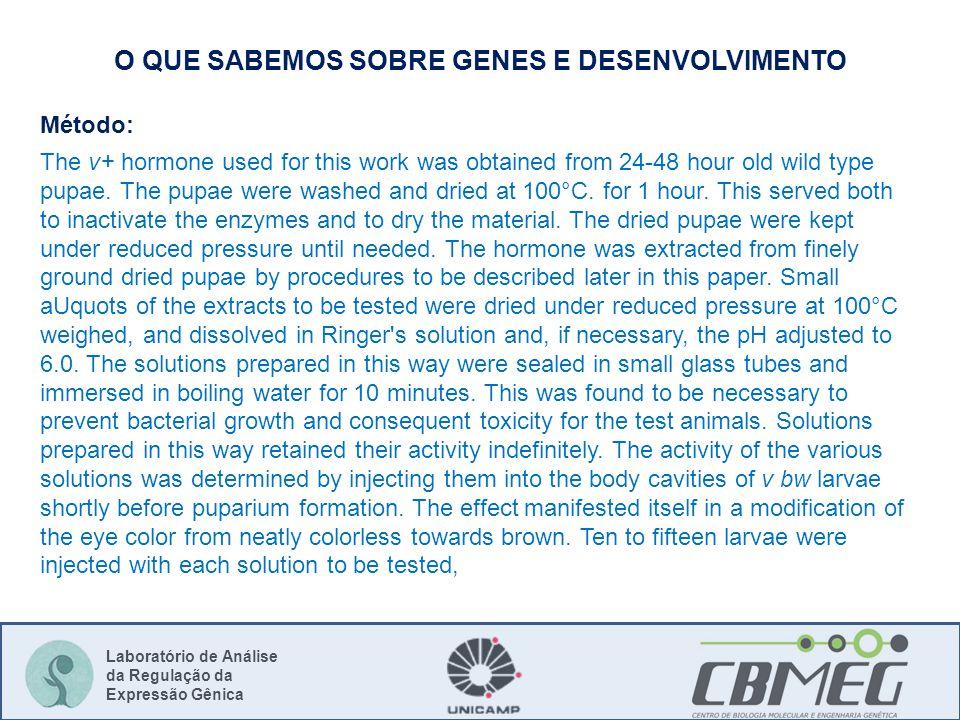 Laboratório de Análise da Regulação da Expressão Gênica O QUE SABEMOS SOBRE GENES E DESENVOLVIMENTO Método: The v+ hormone used for this work was obtained from 24-48 hour old wild type pupae.
