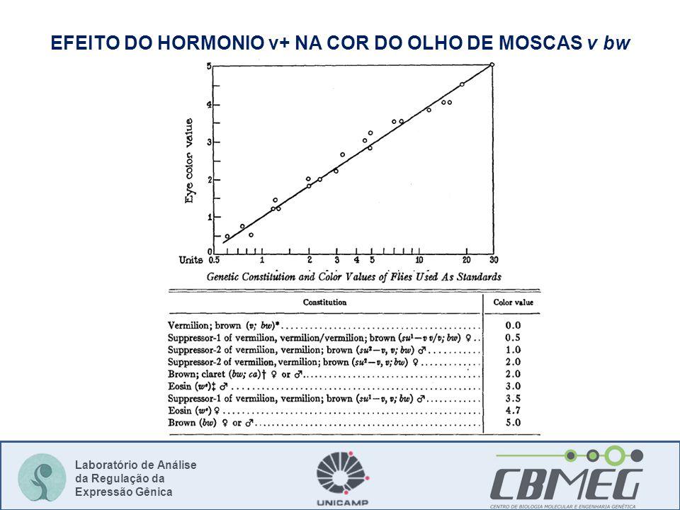 Laboratório de Análise da Regulação da Expressão Gênica EFEITO DO HORMONIO v+ NA COR DO OLHO DE MOSCAS v bw