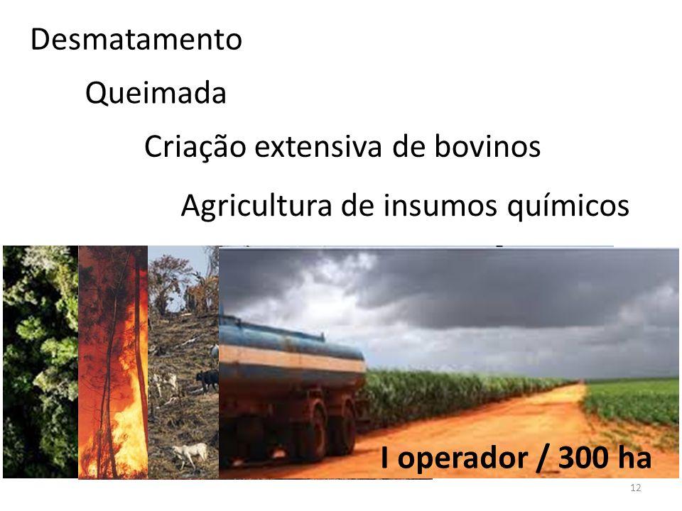 12 Desmatamento Queimada Criação extensiva de bovinos Agricultura de insumos químicos I operador / 300 ha