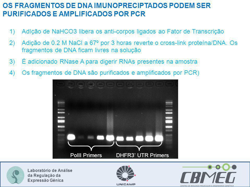 Laboratório de Análise da Regulação da Expressão Gênica 1)AdIção de NaHCO3 libera os anti-corpos ligados ao Fator de Transcrição 2)Adição de 0.2 M NaCl a 67º por 3 horas reverte o cross-link proteína/DNA.