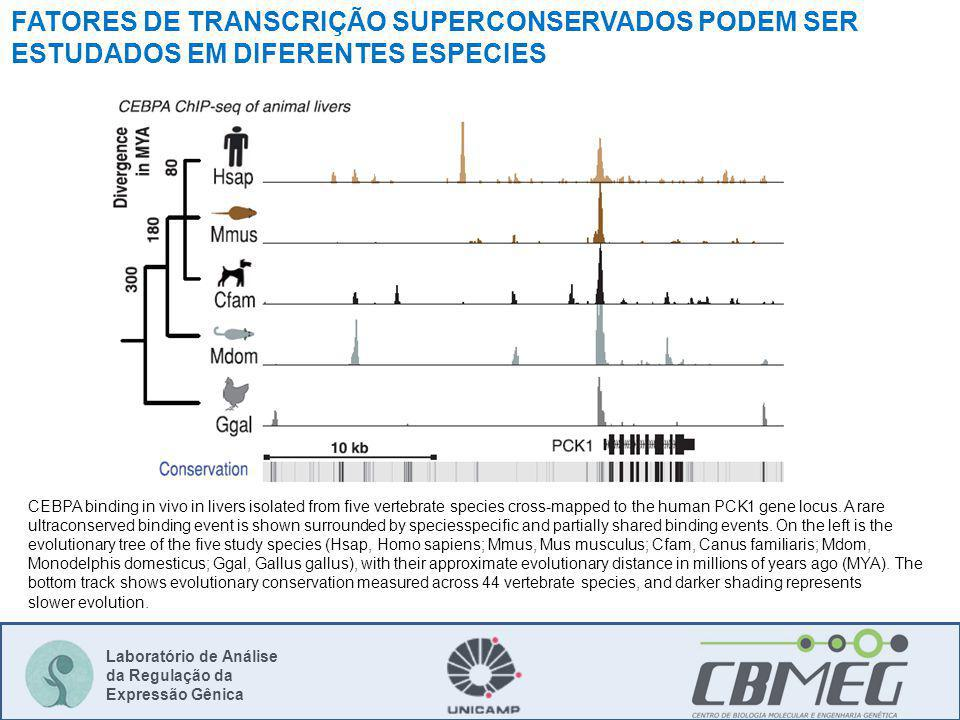 Laboratório de Análise da Regulação da Expressão Gênica CEBPA binding in vivo in livers isolated from five vertebrate species cross-mapped to the human PCK1 gene locus.