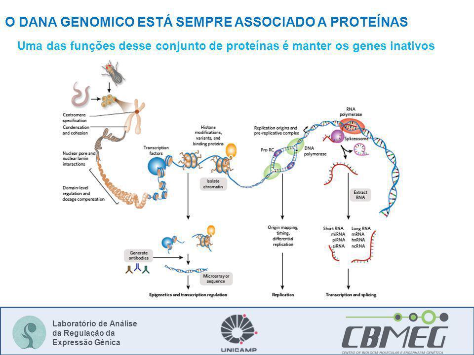 Laboratório de Análise da Regulação da Expressão Gênica Uma das funções desse conjunto de proteínas é manter os genes inativos O DANA GENOMICO ESTÁ SE