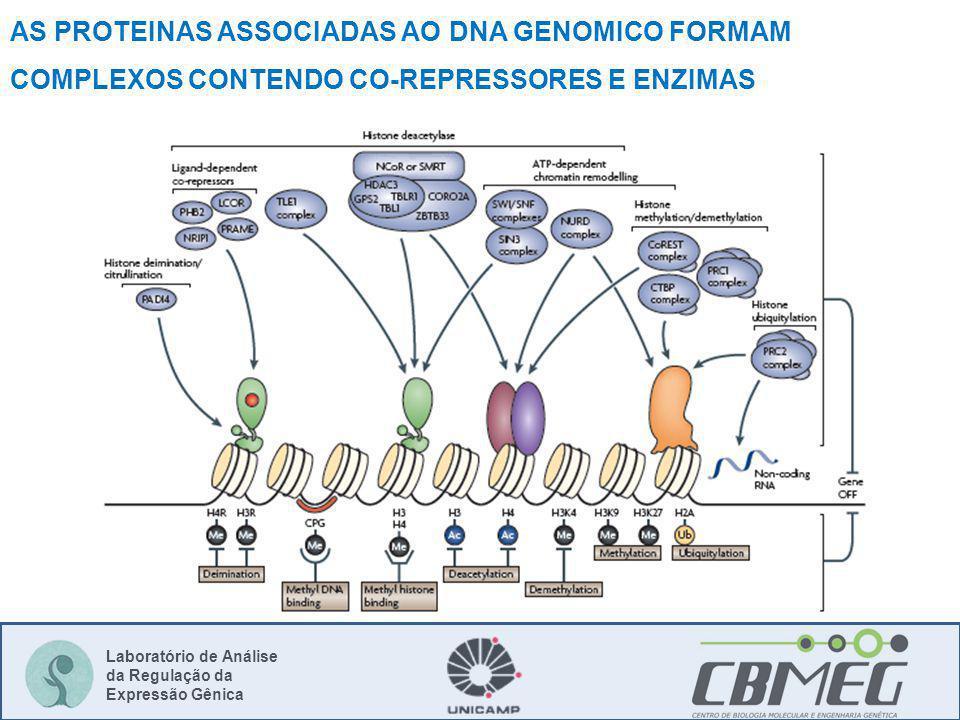 Laboratório de Análise da Regulação da Expressão Gênica AS PROTEINAS ASSOCIADAS AO DNA GENOMICO FORMAM COMPLEXOS CONTENDO CO-REPRESSORES E ENZIMAS