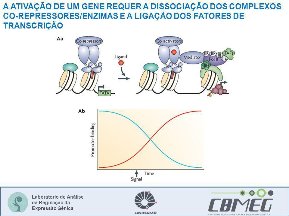 Laboratório de Análise da Regulação da Expressão Gênica A ATIVAÇÃO DE UM GENE REQUER A DISSOCIAÇÃO DOS COMPLEXOS CO-REPRESSORES/ENZIMAS E A LIGAÇÃO DOS FATORES DE TRANSCRIÇÃO