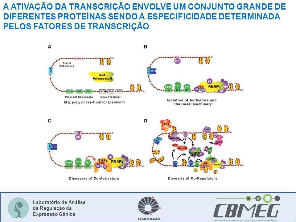 Laboratório de Análise da Regulação da Expressão Gênica A ATIVAÇÃO DA TRANSCRIÇÃO ENVOLVE UM CONJUNTO GRANDE DE DIFERENTES PROTEÍNAS SENDO A ESPECIFICIDADE DETERMINADA PELOS FATORES DE TRANSCRIÇÃO