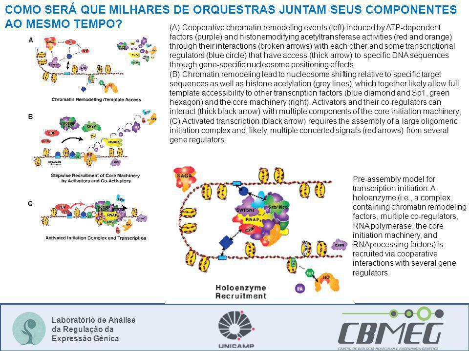 Laboratório de Análise da Regulação da Expressão Gênica COMO SERÁ QUE MILHARES DE ORQUESTRAS JUNTAM SEUS COMPONENTES AO MESMO TEMPO.