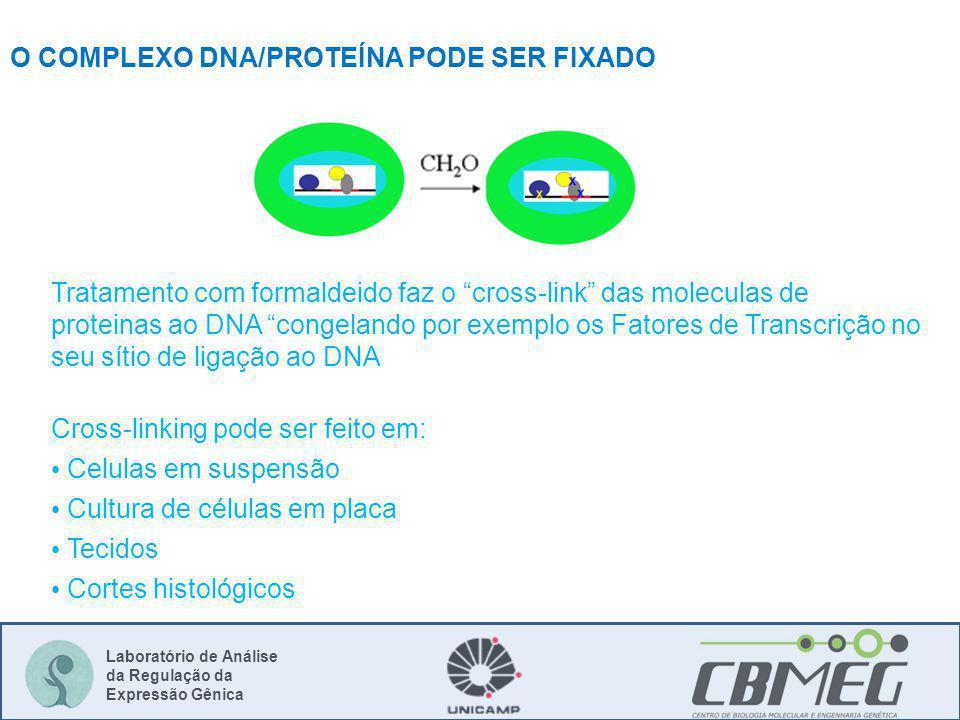 Laboratório de Análise da Regulação da Expressão Gênica O COMPLEXO DNA/PROTEÍNA PODE SER FIXADO Tratamento com formaldeido faz o cross-link das molecu