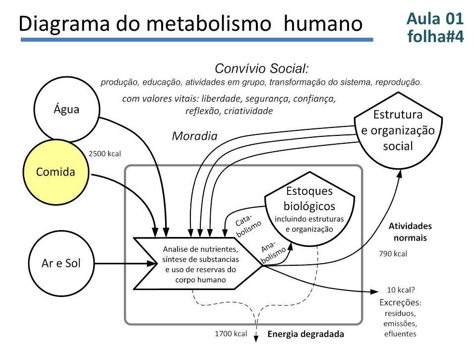 Aula 01 folha#5 Diagrama do metabolismo social