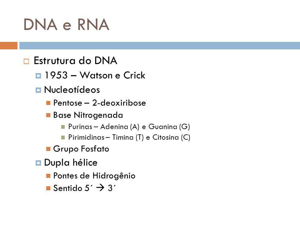 DNA e RNA Estrutura do DNA 1953 – Watson e Crick Nucleotídeos Pentose – 2-deoxiribose Base Nitrogenada Purinas – Adenina (A) e Guanina (G) Pirimidinas