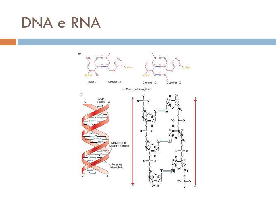 Estrutura do RNA Em geral fita simples Pentose – Ribose Uracila (U) ao invés de Timina (T) Dogma Central da Biologia Molecular Transcrição DNA mRNA Splicing Tradução Ribomossomos e tRNA RNAm Proteína