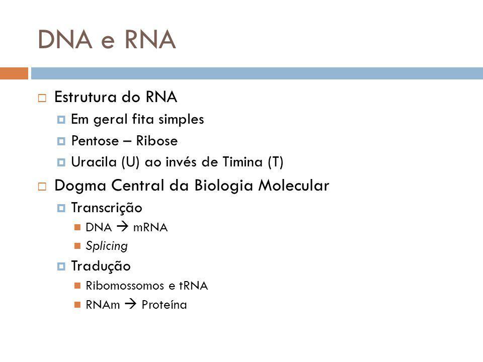 Estrutura do RNA Em geral fita simples Pentose – Ribose Uracila (U) ao invés de Timina (T) Dogma Central da Biologia Molecular Transcrição DNA mRNA Sp