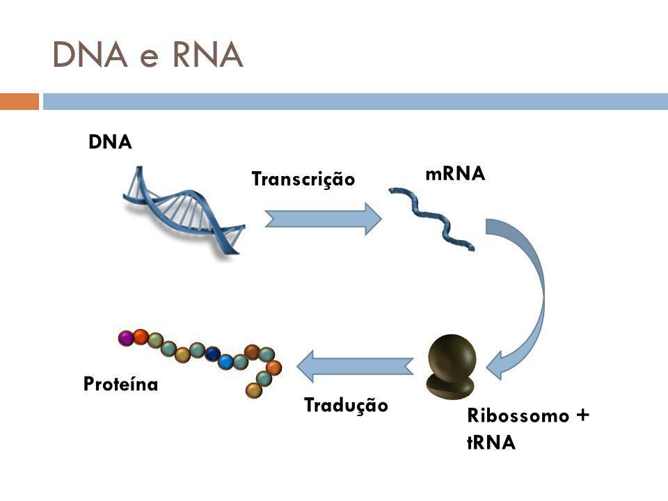 Proteínas Blocos formadores dos seres vivos Moléculas polipeptídicas Sequência de resíduos de Aminoácidos Ligações peptídicas Aminoácido Carbono Central (C ) Grupo Carboxila - COOH Grupo Amina – NH 2 Cadeia Lateral (R)