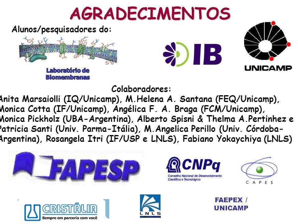 FAEPEX / UNICAMP AGRADECIMENTOS Alunos/pesquisadores do: Colaboradores: Anita Marsaiolli (IQ/Unicamp), M.Helena A. Santana (FEQ/Unicamp), Monica Cotta