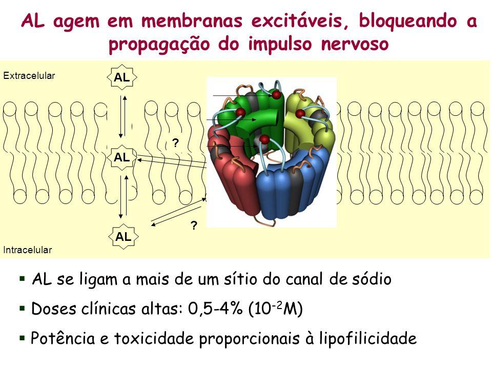 AL agem em membranas excitáveis, bloqueando a propagação do impulso nervoso AL se ligam a mais de um sítio do canal de sódio Doses clínicas altas: 0,5