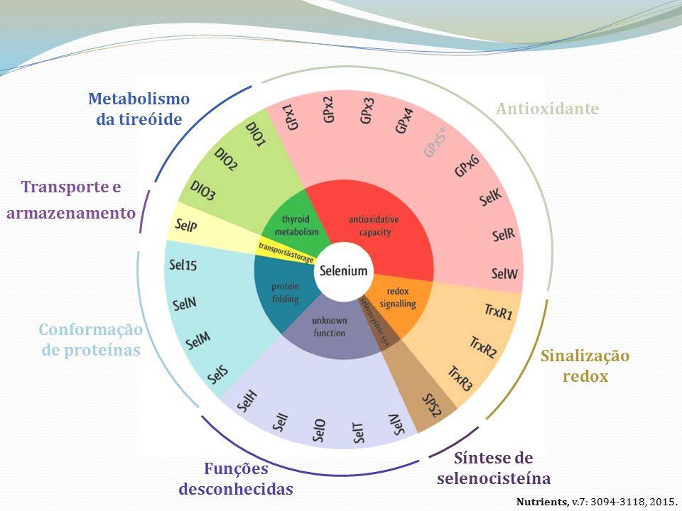Antioxidante Metabolismo da tireóide Transporte e armazenamento Sinalização redox Síntese de selenocisteína Conformação de proteínas Funções desconhecidas Nutrients, v.7: 3094-3118, 2015.