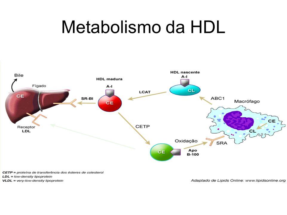Metabolismo da HDL