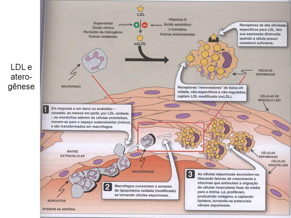 LDL e atero- gênese