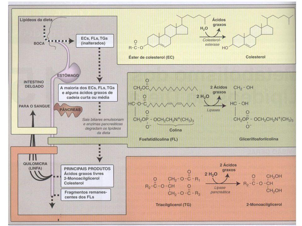 Absorção e transporte dos lipídeos –Lipoproteínas