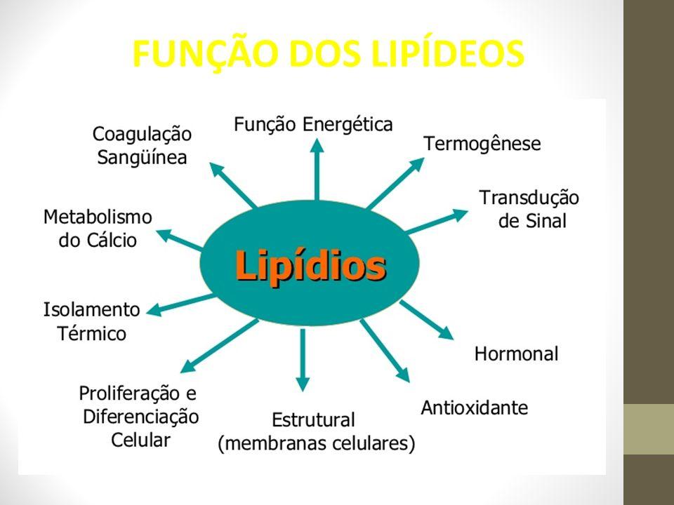 FUNÇÃO DOS LIPÍDEOS