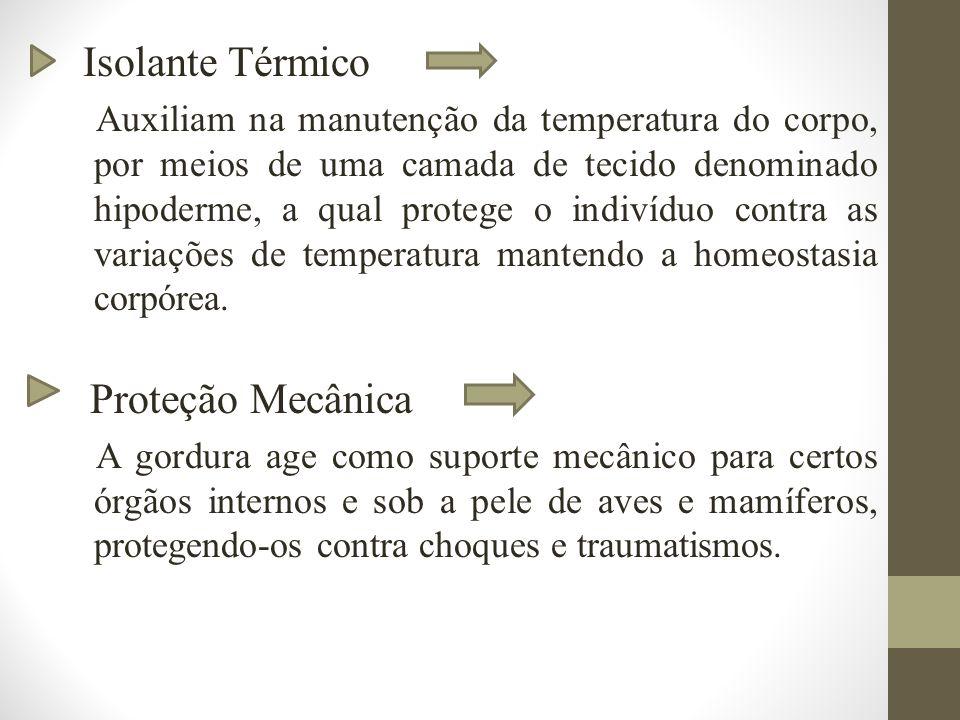 Isolante Térmico Auxiliam na manutenção da temperatura do corpo, por meios de uma camada de tecido denominado hipoderme, a qual protege o indivíduo contra as variações de temperatura mantendo a homeostasia corpórea.