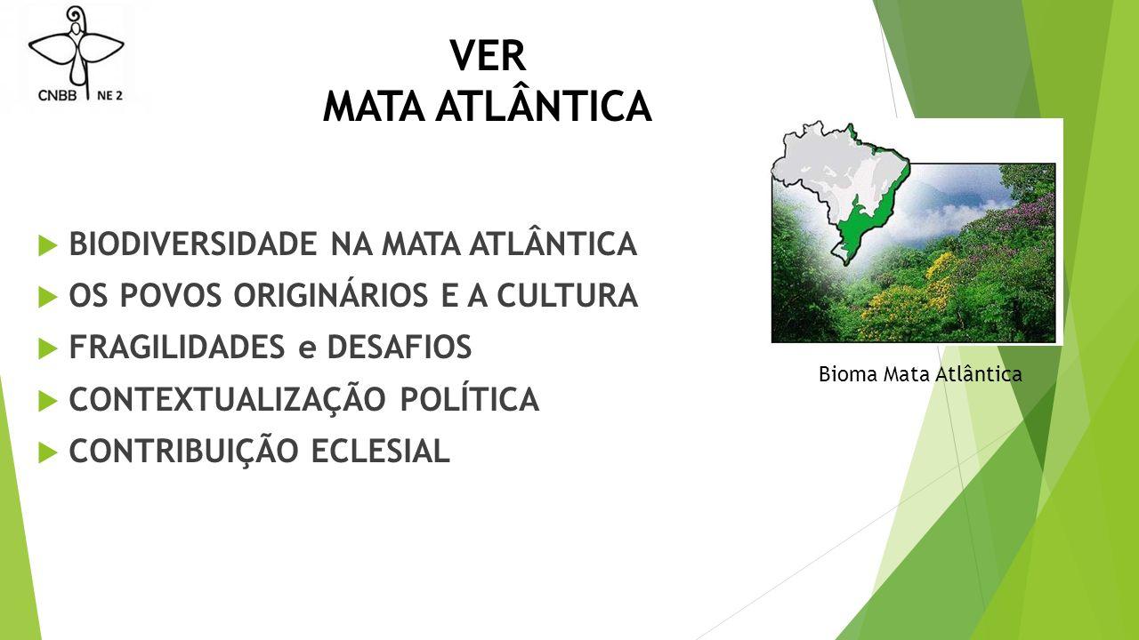 VER MATA ATLÂNTICA  BIODIVERSIDADE NA MATA ATLÂNTICA  OS POVOS ORIGINÁRIOS E A CULTURA  FRAGILIDADES e DESAFIOS  CONTEXTUALIZAÇÃO POLÍTICA  CONTRIBUIÇÃO ECLESIAL Bioma Mata Atlântica