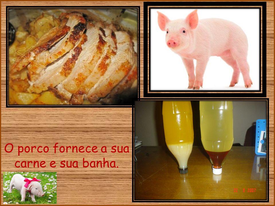 O porco fornece a sua carne e sua banha.