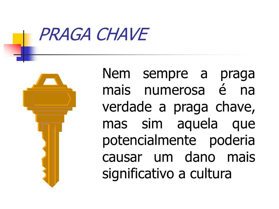 PRAGA CHAVE Nem sempre a praga mais numerosa é na verdade a praga chave, mas sim aquela que potencialmente poderia causar um dano mais significativo a cultura