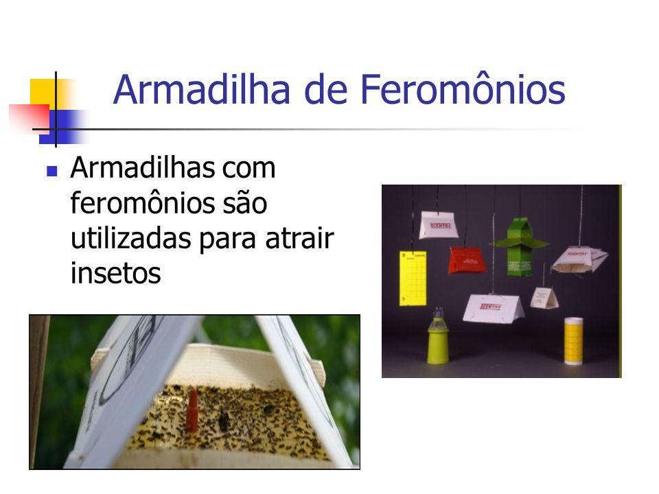 Armadilha de Feromônios Armadilhas com feromônios são utilizadas para atrair insetos