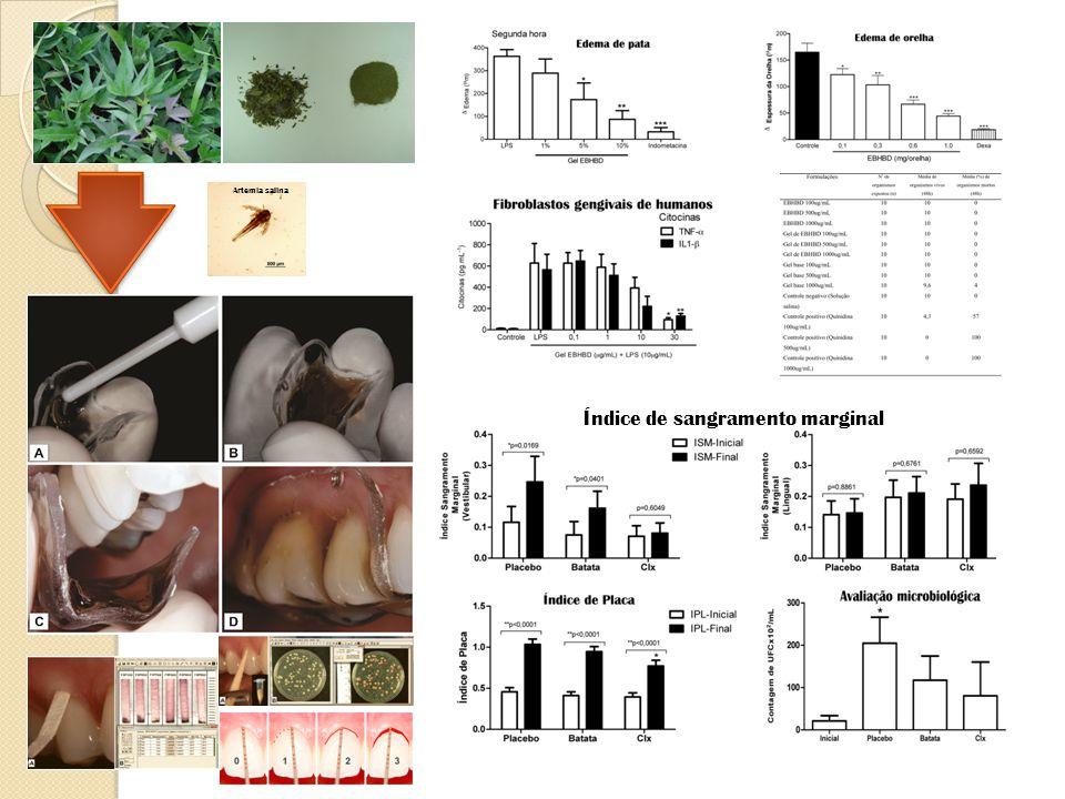 Índice de sangramento marginal Artemia salina