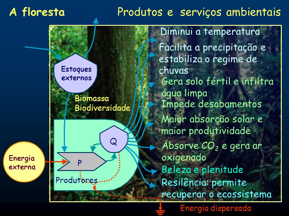 Produtores P Q Energia externa Interações Energia dispersada Estoques externos A floresta: relações plantas-solo Maior porosidade no solo Solubilizaçã