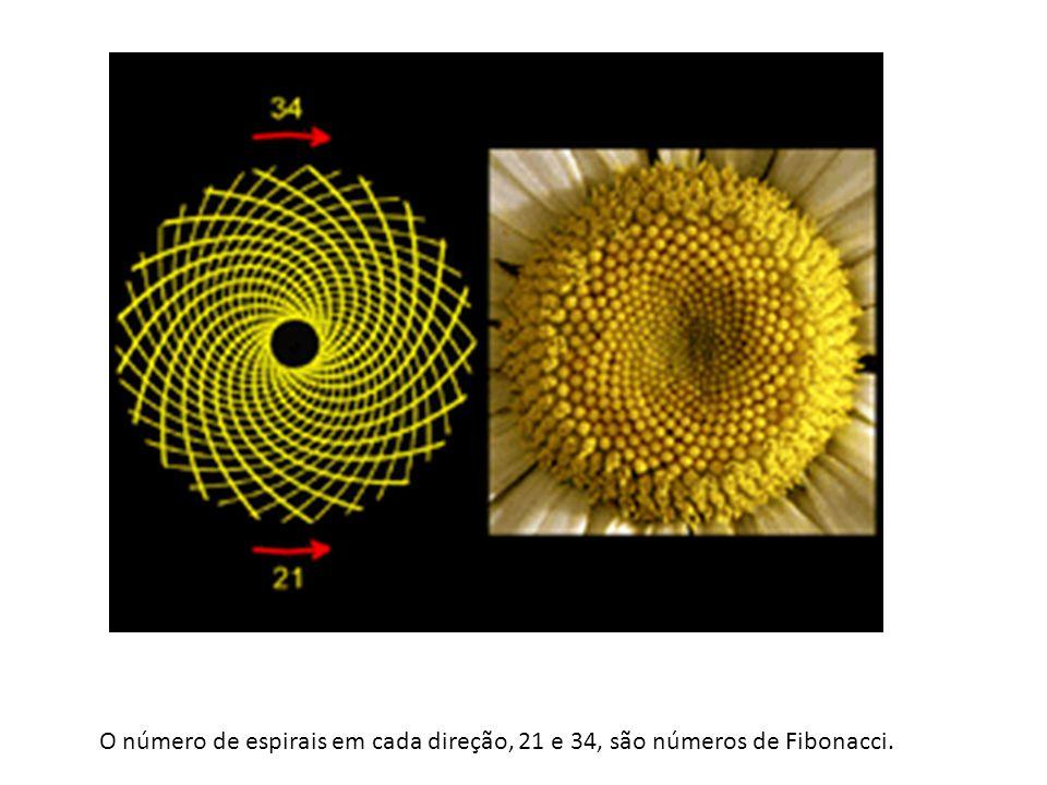 O número de espirais em cada direção, 21 e 34, são números de Fibonacci.