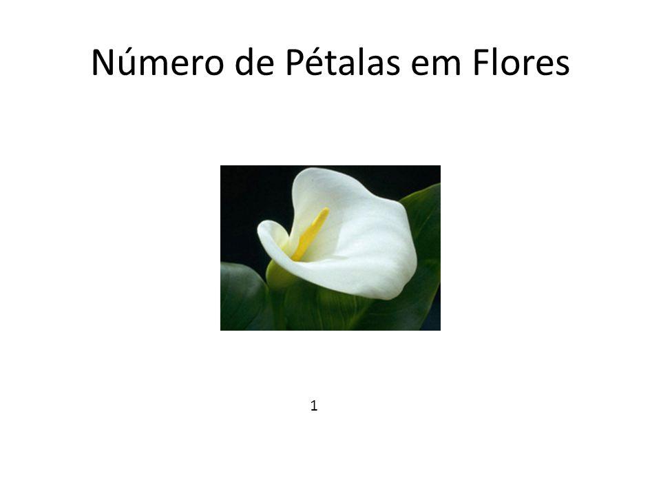 Número de Pétalas em Flores 1