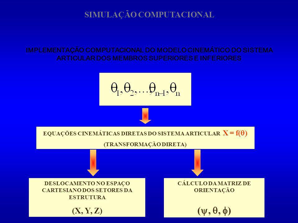 IMPLEMENTAÇÃO COMPUTACIONAL DO MODELO CINEMÁTICO DO SISTEMA ARTICULAR DOS MEMBROS SUPERIORES E INFERIORES EQUAÇÕES CINEMÁTICAS DIRETAS DO SISTEMA ARTI
